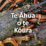 Te Āhua o te Kōura